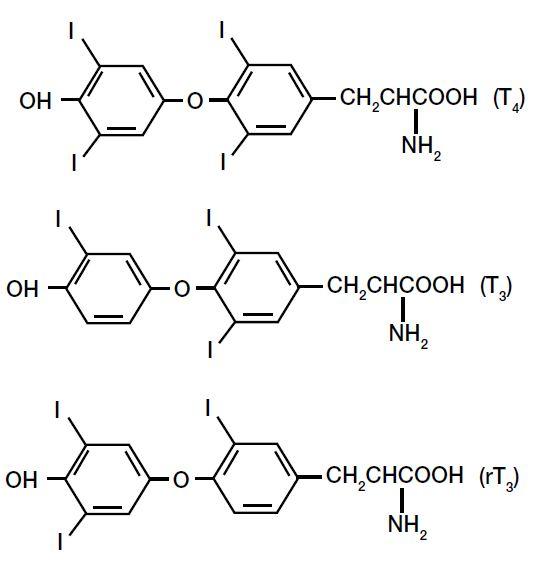 T4 T3 and rT3 molecule comparison
