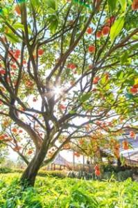 Lead_Tree