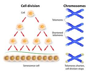 Lead -Telomeres